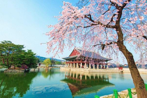 سفر به کره، سفر به سنت و مدرنیته