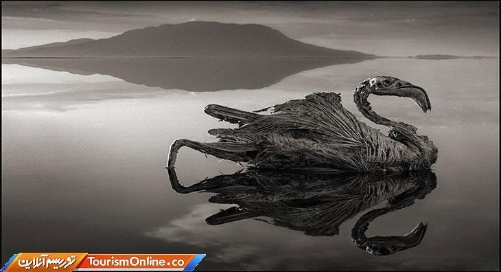 دریاچه ترسناک که همه چیز را به سنگ تبدیل می کند!، تصاویر