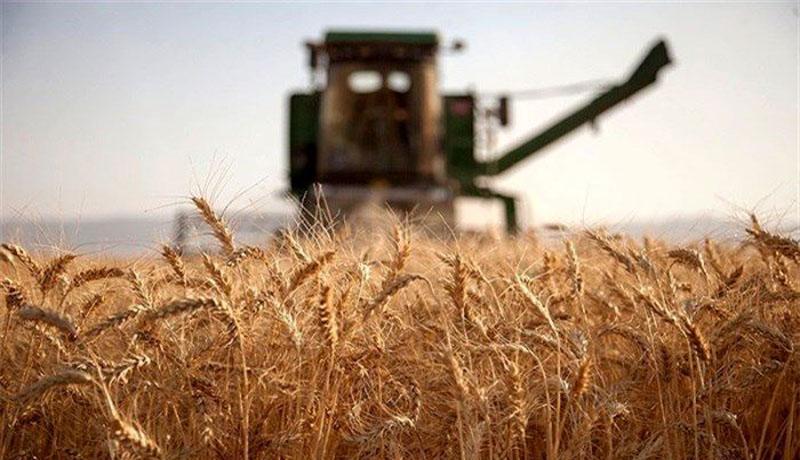 فراوری گندم 50 درصد افت می نماید ، عدم استقبال از کودهای شیمیایی