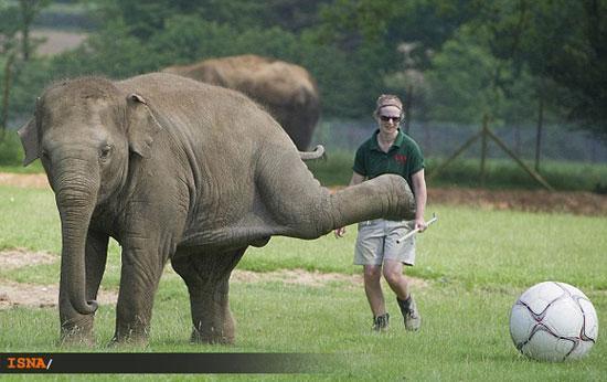 فیل فوتبالیست راهی یورو 2012 شد! ، عکس
