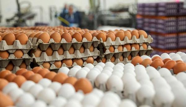 قیمت تخم مرغ در بازار چقدر شد؟